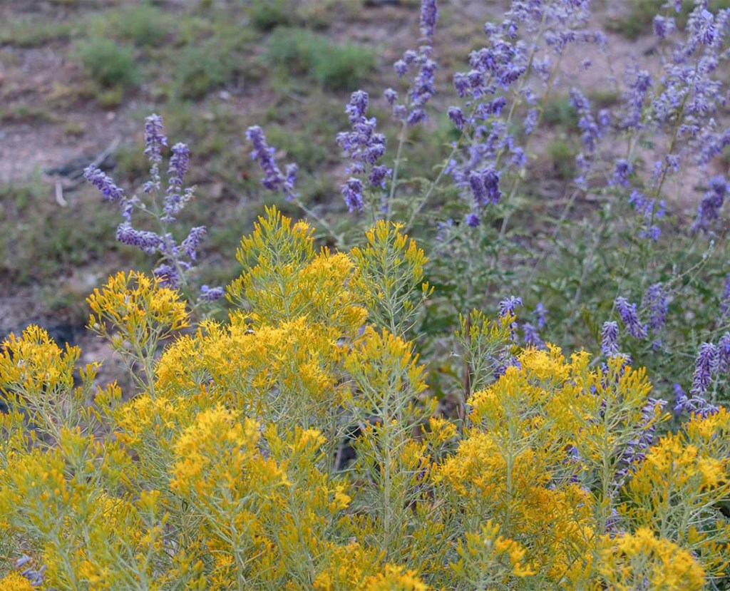 Colorful wildflowers in bloom at the Rio Grande Gorge Bridge in New Mexico. Photo: Wendy Nordvik-Carr©