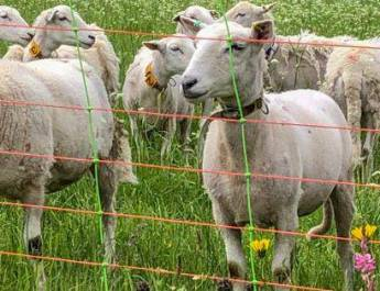 First Alpine Livestock Protection and Press Conference