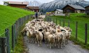 Register now: Alpine Livestock Protection and Press Conference