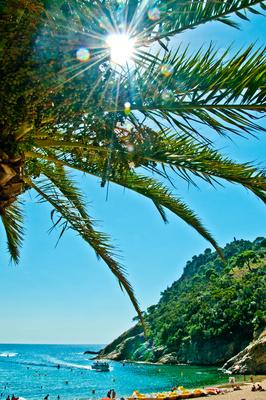 urlaub unter palmen am strand