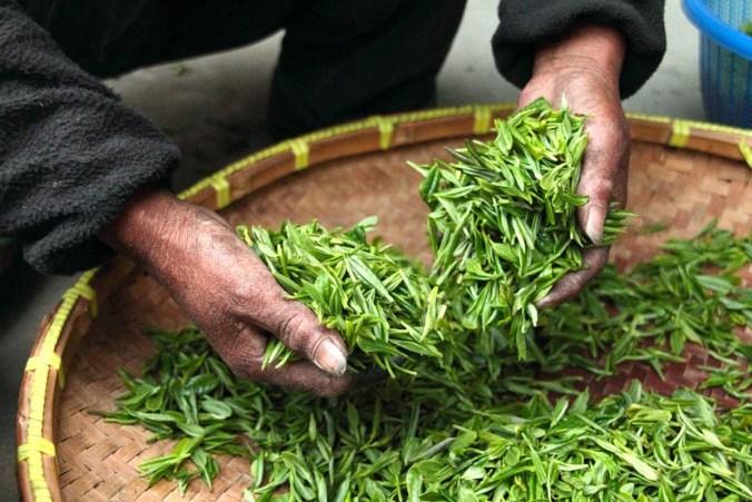 Tee Teekräuter Teebrühe