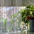 観葉植物で幸運を引き寄せる風水活用法7選