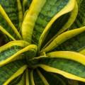幸運を呼ぶ5つの観葉植物の種類と効果的な配置場所
