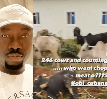 Over 200 cows: