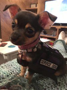 Small service dog vest cute
