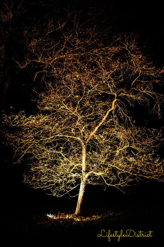 Lifestyle District | Bristol culture & photography blog: Enchanted Xmas CoWheels &emdash; DSC_5183