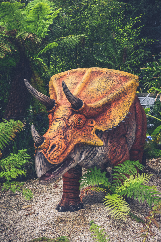 Face to face with a triceratops at Dinomania at Bristol Zoo Gardens