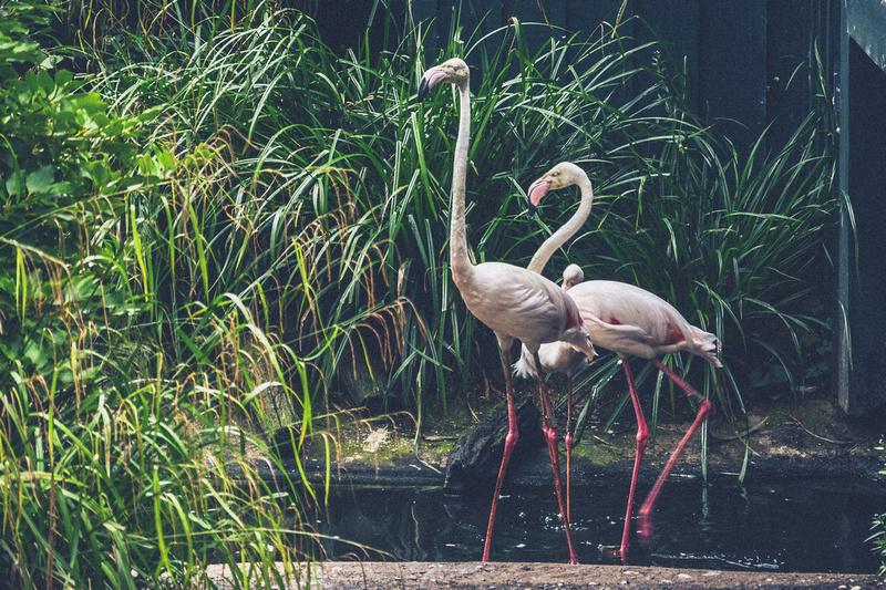 Dinomania at Bristol Zoo