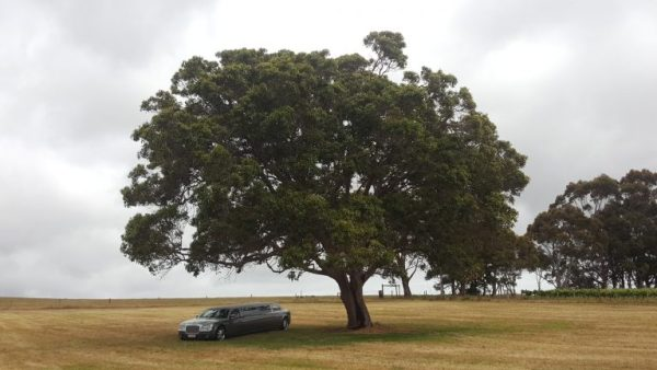 Reasons why camping is good for you. Pic of stretch limo under a tree.