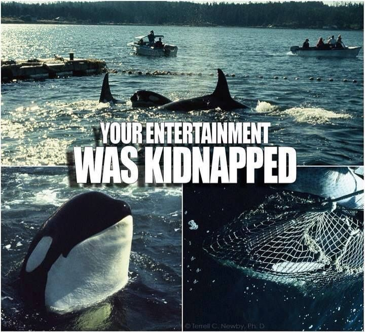 Seaworld, and the reason I will never visit the park again (my Florida Adventures)