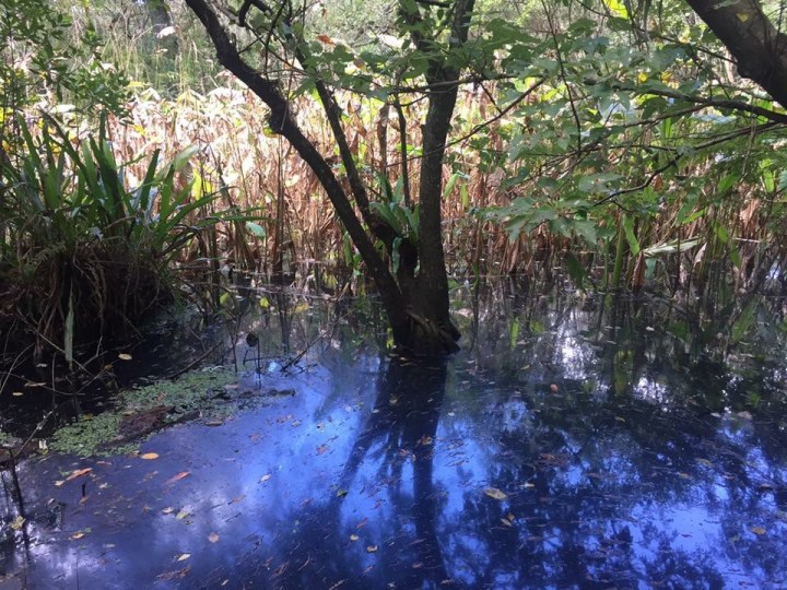 Audubon Corkscrew swamp sanctuary, Naples (My Florida Adventures)