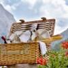 Dolomitica: in Alta Badia il pic-nic diventa gourmet