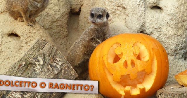 halloween-bioparco-zoom-torino