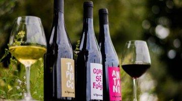 La Tognazza Amata: conquista con i suoi vini anche Ferrara