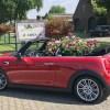 Fiera di Lottum: non solo tulipani, l'Olanda si tinge di rosa