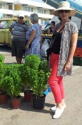 endless basil plants