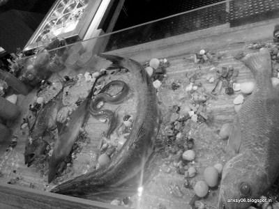 Seafood Display Sea Bass Shark Eel Octopus Ladyfish