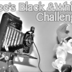 Cee Black and White Challenge