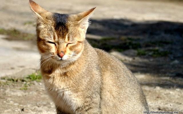 Cats #WordlessWednesday