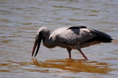 Poovar Backwaters