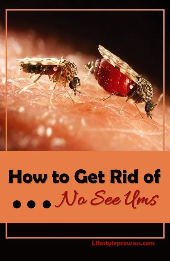 How to Get Rid of No See Ums In The Yard