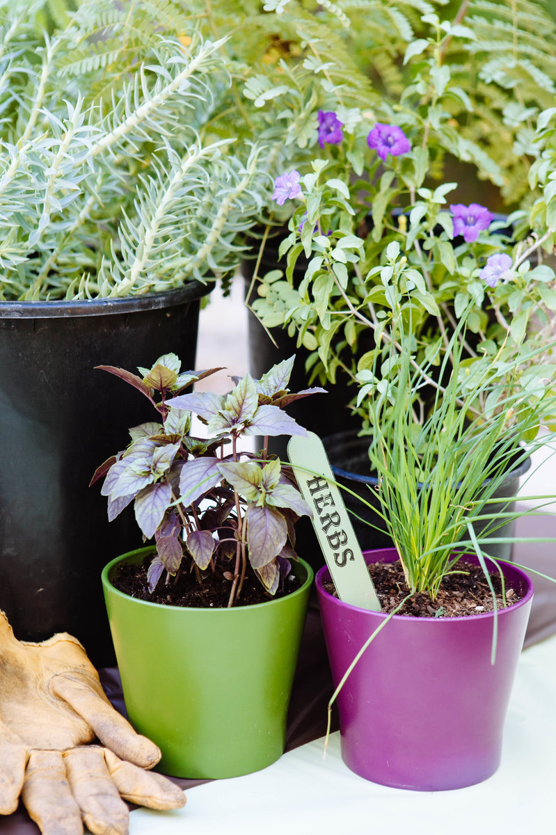 Making Your Herb Garden Grow North Scottsdale Lifestyle
