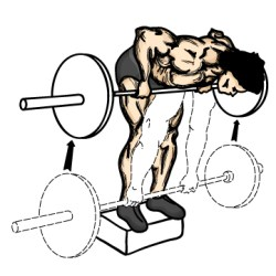 1. Bent Over Barbell Row