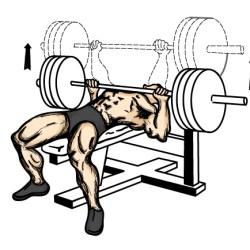 4. Bench Press