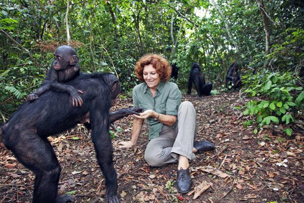 sexy-female-chimp