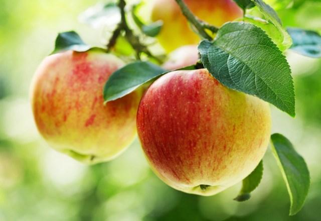 सेब खाने के लाभ