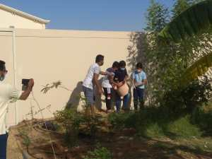 Tree planting on Environment Day