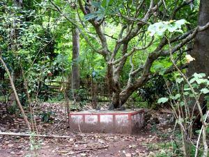 Ecosystem Restoration of Sacred Groves