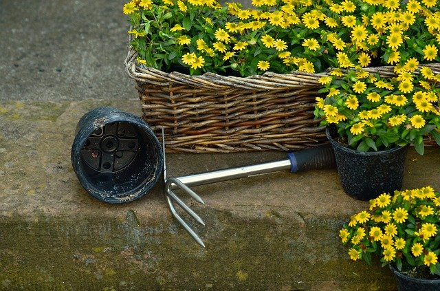 5 Easy Tips to Avoid Back Pain While Gardening