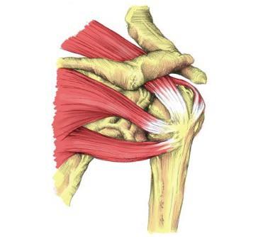 Shoulder Joint Pain Diagram