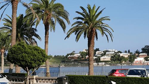 Bermuda trees