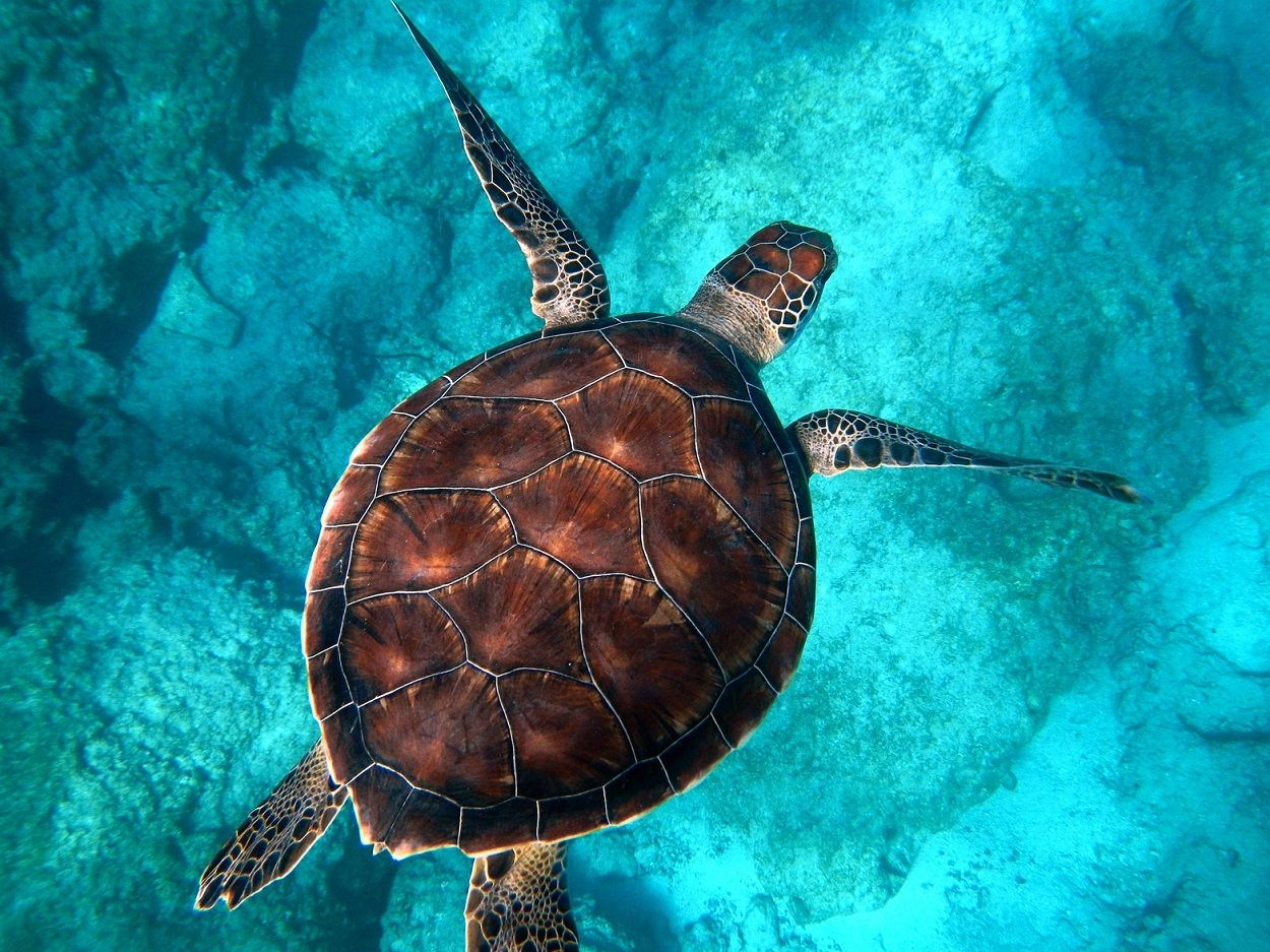 sea-turtle seychelles marine conservation