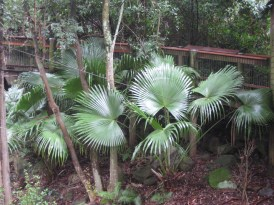 Near the end of the raised platforms, there was a hang-out around a set of park benches. These giant ferns are just part of the local foliage