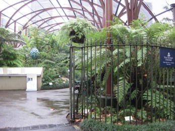 The Fern gardens. By this point it was snap and go