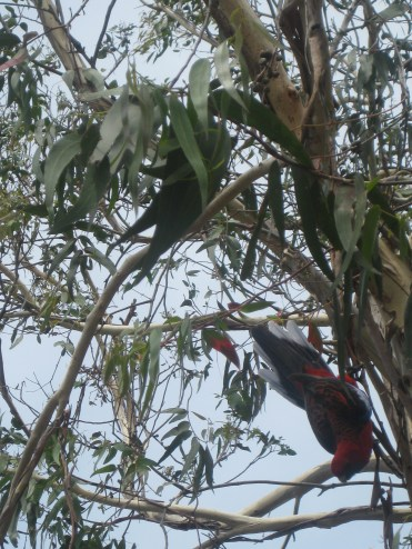 A few parrots also hung out, looking for birdseed