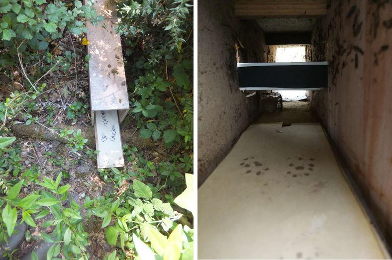 tunnel à empreinte ©GREGE et piège à poil intégré dans un tunnel à empreintes ©GREGE/LIFE VISON