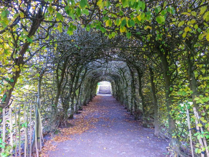 cardiff wales leaf tunnel