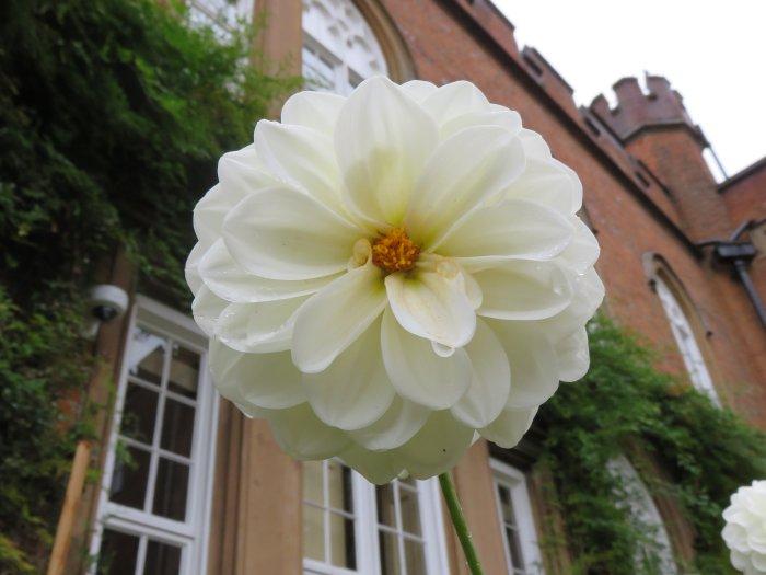 cumberland-lodge-flower