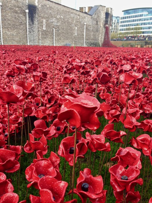 tower-of-london-poppies-closeup