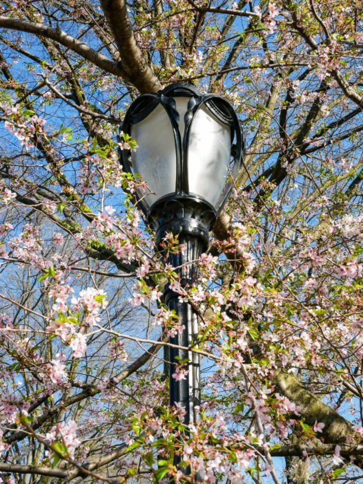 central park flowers and lightpole