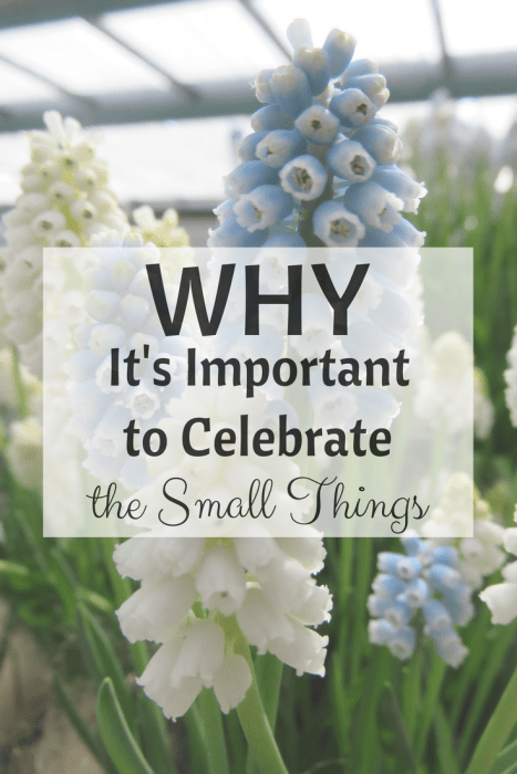 Why It's Important to Celebrate the Small Things