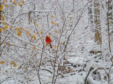 nyc snowfall