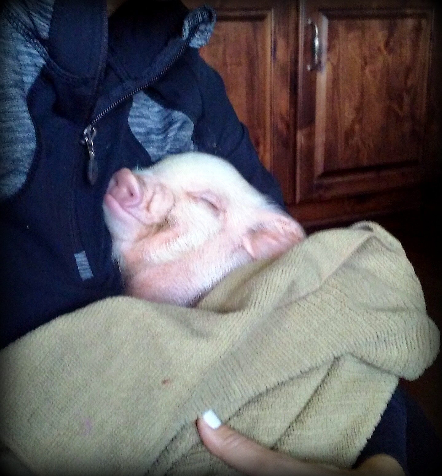 I Want To Cuddle With You Quotes: Bonding With Your Mini Pig
