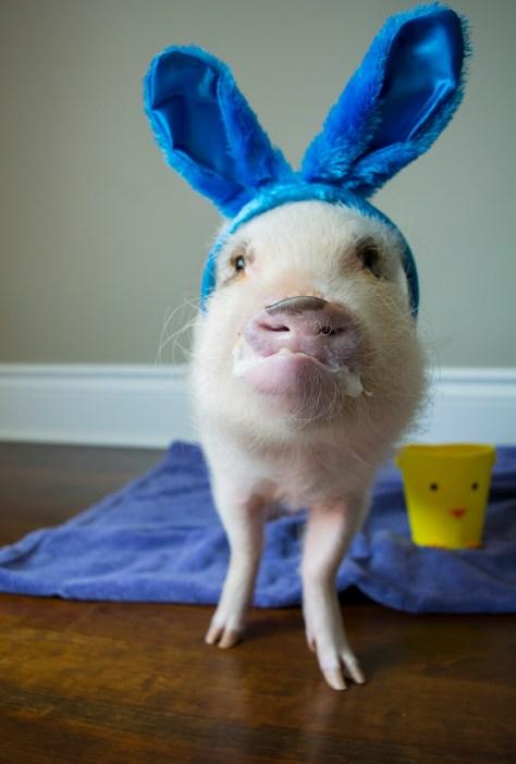 Oscar_Easter_4-37