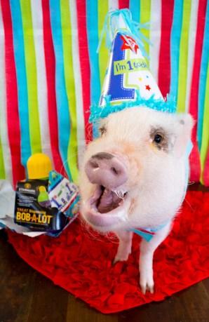 Oscar_First_Birthday_10-42
