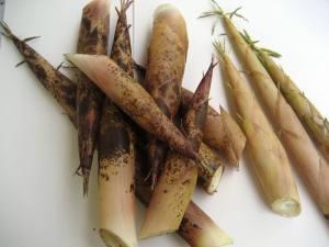 fresh bamboo shoots